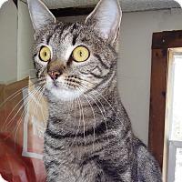 Adopt A Pet :: Stella - N. Billerica, MA