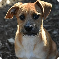 Adopt A Pet :: Darby - North Brunswick, NJ