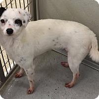 Adopt A Pet :: Cruella - Humble, TX