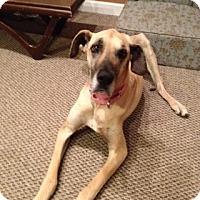 Adopt A Pet :: Nikko - Indianapolis, IN