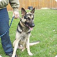 Adopt A Pet :: Kanobie - Hastings, NY