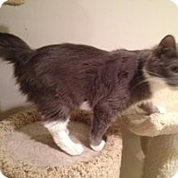 Adopt A Pet :: Brittany - East Hanover, NJ