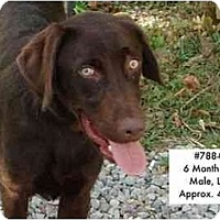 Adopt A Pet :: # 788-08 - ADOPTED! - Zanesville, OH