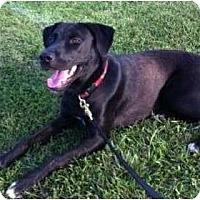 Adopt A Pet :: Sophie - Haverhill, MA