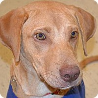 Adopt A Pet :: Maci- In CT - West Hartford, CT