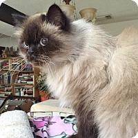Adopt A Pet :: Priscilla - Davis, CA