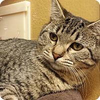 Adopt A Pet :: Beatrix - Irvine, CA