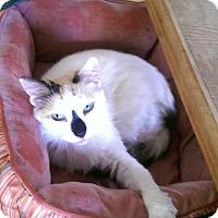 Adopt A Pet :: Paint - Naples, FL