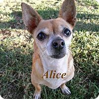 Adopt A Pet :: Alice - El Cajon, CA