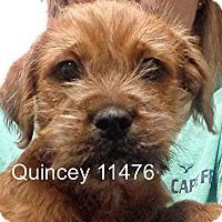 Adopt A Pet :: Quincey - Alexandria, VA