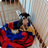 Adopt A Pet :: Nic - Saint Clair, MO