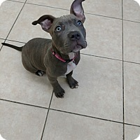 Adopt A Pet :: Heather - Lakeland, FL