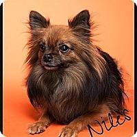 Adopt A Pet :: Niles - Orange, CA