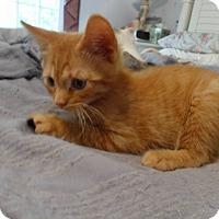 Adopt A Pet :: Nacho - Colmar, PA