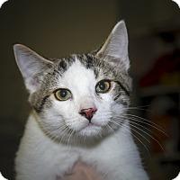 Adopt A Pet :: Pauley - Rockaway, NJ
