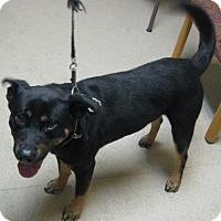 Adopt A Pet :: Roscoe - Gary, IN