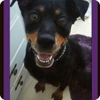 Adopt A Pet :: Sonja - San Martin, CA