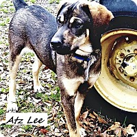 Adopt A Pet :: Atz Lee in CT - Manchester, CT