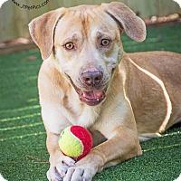 Adopt A Pet :: Mack - GREENLAWN, NY