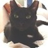 Adopt A Pet :: Eve - Vancouver, BC