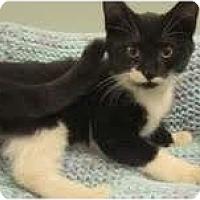 Adopt A Pet :: Oakley - Arlington, VA