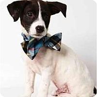 Adopt A Pet :: Berry - New York, NY