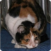 Adopt A Pet :: Good Golly MissPolly - New York, NY