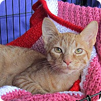 Adopt A Pet :: Seth - Seminole, FL
