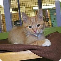 Adopt A Pet :: Moose - Dover, OH