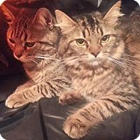 Adopt A Pet :: Bindy and Alexa - Harrisburg, NC