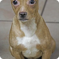 Adopt A Pet :: Peanut - Yuba City, CA
