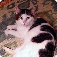 Adopt A Pet :: Ireland - Fairfax, VA