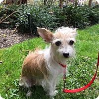 Adopt A Pet :: PJ - Long Beach, NY