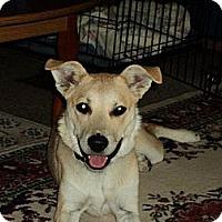 Adopt A Pet :: Sophie - Essex Junction, VT