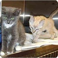 Adopt A Pet :: Adorable kittens - Lake Charles, LA