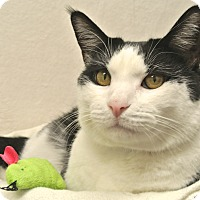 Adopt A Pet :: Zeus - Foothill Ranch, CA