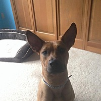 Adopt A Pet :: Doyle - Foster Needed - Detroit, MI