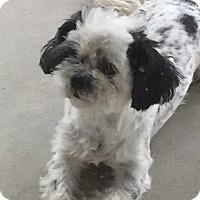 Adopt A Pet :: TRUDY - Grand Island, FL