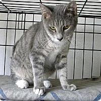 Adopt A Pet :: Bianca - Miami, FL
