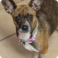 Adopt A Pet :: Lucy - Yuba City, CA