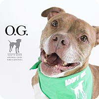 Adopt A Pet :: Victor aka O.G. - South Bend, IN