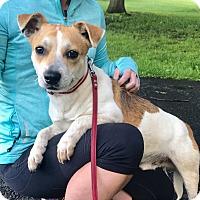 Adopt A Pet :: Buddy - Hillsboro, IL
