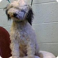 Adopt A Pet :: Keely - Decatur, GA