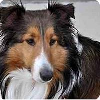 Adopt A Pet :: Loretta - Indiana, IN