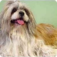 Adopt A Pet :: Sebastian - New York, NY