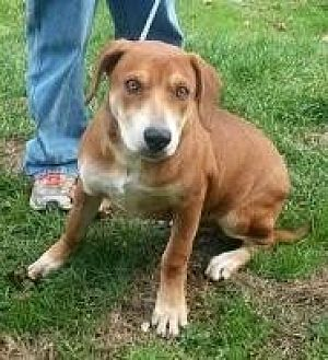 Coonhound (Unknown Type) Mix Dog for adoption in Prestonsburg, Kentucky - lenny