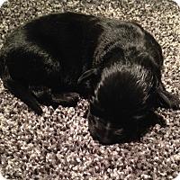 Adopt A Pet :: Birch - Toledo, OH