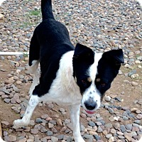 Adopt A Pet :: Peggy - Phoenix, AZ