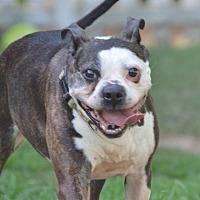 Adopt A Pet :: Mr. Bongo - Courtland, AL