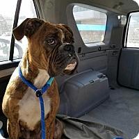Adopt A Pet :: Rue - Hillside, IL